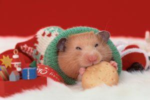 ESP Christmas Quiz