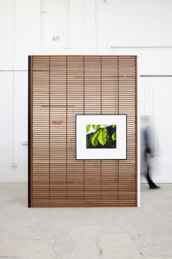 Display Show